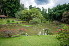 O jardim botânico real O lago Sri Lanka Foto de Stock Royalty Free