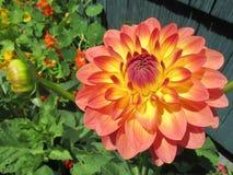 O jardim da mamã Imagens de Stock