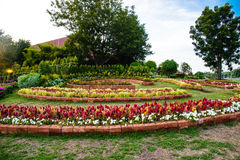 O jardim das flores Fotografia de Stock Royalty Free