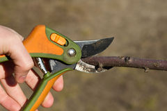 O jardim das tesouras está cortando a árvore Imagem de Stock