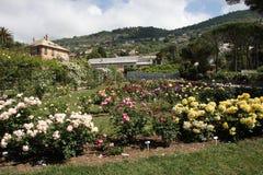 O jardim de rosas Fotografia de Stock