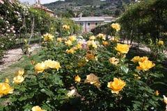 O jardim de rosas Imagens de Stock Royalty Free