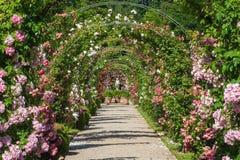 O jardim de rosas Beutig em Baden-Baden Fotos de Stock Royalty Free