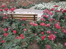 O jardim está completo de flores vermelhas e brancas foto de stock