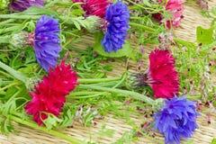 o jardim floresce centáureas em cores diferentes fotografia de stock