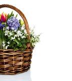 Flores do jardim na cesta Imagem de Stock