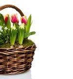 Flores do jardim na cesta Fotos de Stock Royalty Free