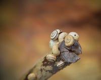 O jardim macro do verão descasca o ramo da lesma do caracol Imagem de Stock Royalty Free