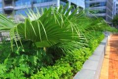 o jardim na ciência da HK e nos parques de tecnologia Foto de Stock Royalty Free