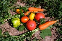 O jardim orgânico fresco cultivou vegetais em uma pedra Imagem de Stock Royalty Free
