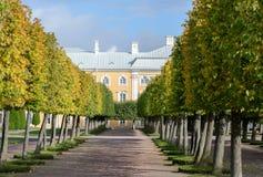 O jardim superior de Peterhof é decorado com uma avenida verde de florescência do Linden, que na estação do outono se transforme  imagens de stock royalty free