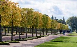 O jardim superior de Peterhof é decorado com uma avenida verde de florescência do Linden, que na estação do outono se transforme  foto de stock