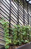 O jardim vegetal vertical Fotografia de Stock Royalty Free