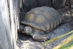 O jardim zoológico central de FL em Sanford Fl Foto de Stock Royalty Free