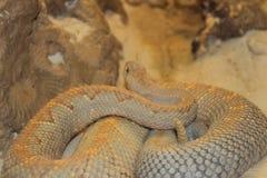 O jardim zoológico central de FL em Sanford Fl Imagens de Stock Royalty Free