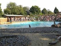 O jardim zoológico, pinguins Imagens de Stock