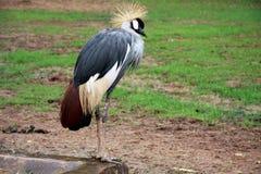 o jardim zoológico selvagem em guangzhou, guangdong, porcelana Imagem de Stock Royalty Free