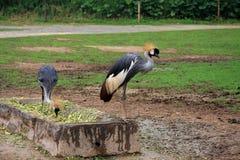 o jardim zoológico selvagem em guangzhou, guangdong, porcelana Fotografia de Stock Royalty Free