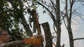 O jardineiro corta os ramos velhos em uma árvore, usando uma serra de cadeia filme