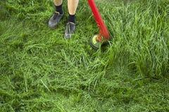 O jardineiro cortou a grama verde no jardim pelo cortador de grama fotografia de stock royalty free