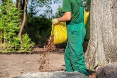 O jardineiro derrama a casca do jardim Fotos de Stock Royalty Free