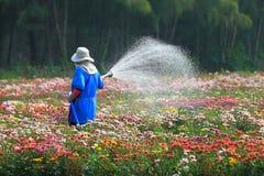 O jardineiro está molhando a planta da flor no berçário imagens de stock