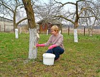 O jardineiro f?mea descora um tronco da Apple-?rvore A mola funciona em um jardim imagens de stock royalty free