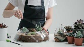 O jardineiro fêmea do florista decora um mini jardim em um vaso de vidro com plantas carnudas e cactos na areia video estoque
