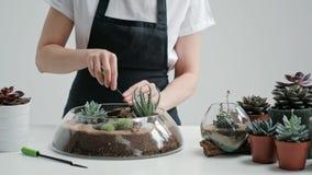 O jardineiro fêmea do florista decora um mini jardim em um vaso de vidro com plantas carnudas e cactos na areia vídeos de arquivo