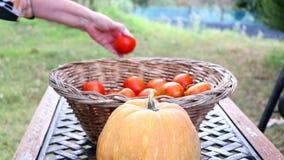 O jardineiro fêmea põe tomates na cesta Dona de casa que põe vegetais e abóbora na cesta no jardim vídeos de arquivo