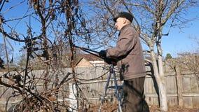 O jardineiro idoso superior do homem poda os galhos dos arbustos vídeos de arquivo