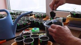 O jardineiro põe o solo no recipiente para semear sementes filme