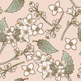 O jasmim floresce o fundo sem emenda Imagem de Stock