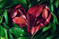 O jasmim folheia coração Fotografia de Stock