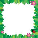 O joaninha nas folhas com verde sae do quadro ilustração royalty free