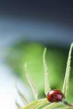 O joaninha vermelho na folha verde, joaninha rasteja na haste da planta em s foto de stock