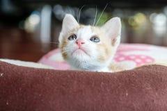 O jogo escondido gato Imagens de Stock