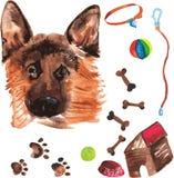 O jogo veterinário que compreendem o pastor alemão e os acessórios para fazem Imagens de Stock Royalty Free