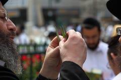 O judeu ortodoxo escolhe a planta ritual Imagens de Stock Royalty Free