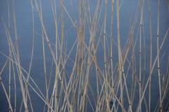 O junco seco em um fundo da água fotografia de stock