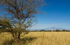 O Kilimanjaro e a montagem Kenya Fotos de Stock Royalty Free