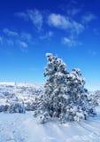 o krajobrazowa zima Obrazy Royalty Free