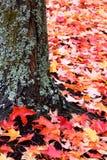 O líquene cobriu as folhas do tronco e do vermelho de árvore Fotografia de Stock Royalty Free