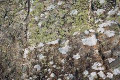 O líquene e o musgo crescem na rocha foto de stock