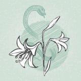 O lírio e a serpente com botão esboçam o vetor do esboço Ilustração floral do vintage Foto de Stock Royalty Free