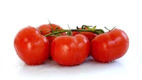 O laço sem emenda, ramo fresco dos tomates no fundo branco, água goteja, vídeo de HD filme