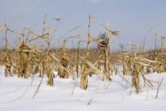 O labirinto e o milho colhem no inverno do campo Fotos de Stock