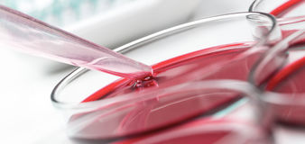 O laboratório petrischalen Imagens de Stock