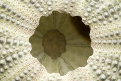 O lado de baixo de um ouriço-do-mar de mar Fotos de Stock