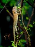 O lagarto está ficando na árvore na natureza fotografia de stock